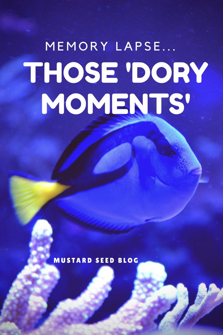 Dory, in the film Finding Nemo, has a problem. She suffers from short term memory loss. Very short term! She can't remember things just minutes after they've been told to her. Often in our wa…