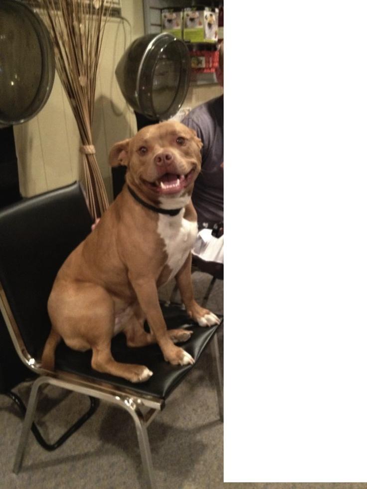 Riley <3 Love for Pitt Bulls :)