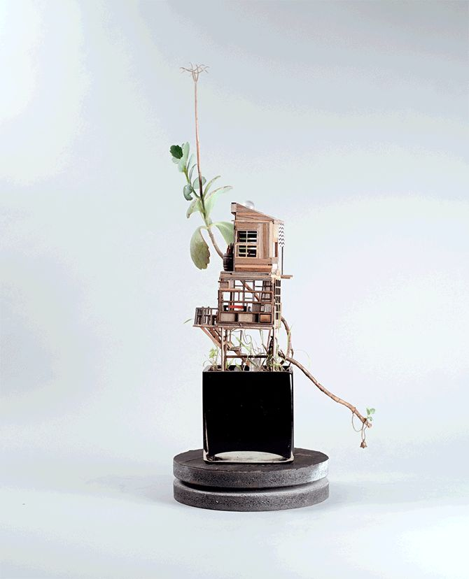 Miniatures pour plantes d'intérieur « Somewhere Small » par Jedediah Corwyn Voltz - Journal du Design