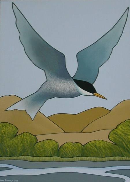 "Black-fronted Tern(Chlidonias albostriatus) ""The Tarapiroe""  Don Binney for Save The Wairau campaign."