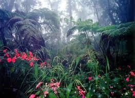 bosque-tropical-humedo-eoceno-fuente-the-resilient-earth. Recreación del primer bosque del Eoceno. Fuente: The Resilient Earth