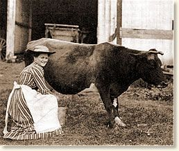Antique photo of farm wife milking cow, 1900.