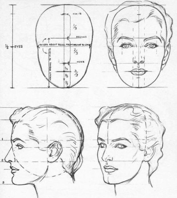 Facial proportion