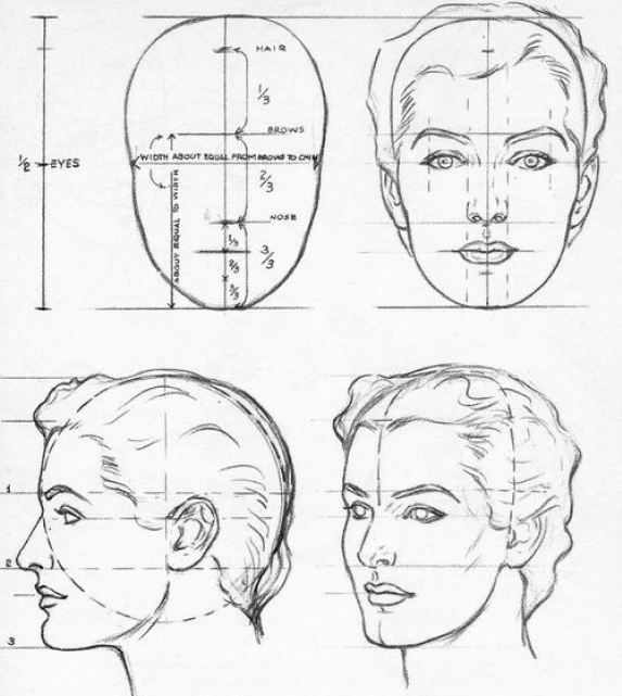 Character Design Proportions : Facial proportions andrew loomis dessin pinterest