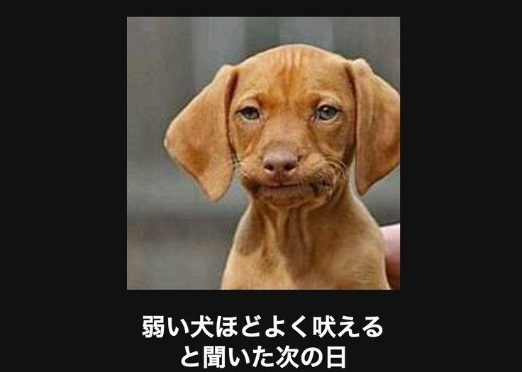 【閲覧注意】つい吹き出してしまう画像大喜利15選