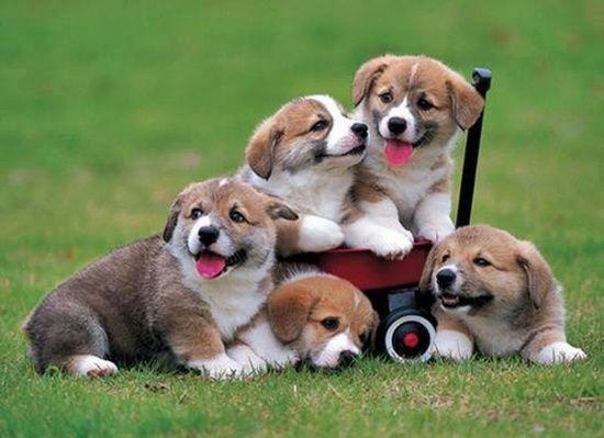 Zvířata - roztomilé štěně -rókák Zvířata, Zvířata - Lynx, zvířata - veverka, Zvířata - smrkový, Zvířata - víla psi, Zvířata - roztomilé kočky, zvířata - veverky, zvířata - kočky, kotě Zvířata - Košík - jpiros Blog - Zvířata, Andělé, víly, animace, GIF, Den matek fotografie, Donald Zolan Obrazy zdraví, kuriozit, Esoteric, vepsaný: večer, noc, napsáno: týden, víkend, s titulky: ráno, odpoledne, s titulky: nápisy, pochoutky, kávu, nápoje Fotky, smuteční, vzpomínka, fotografie, Smuteční…