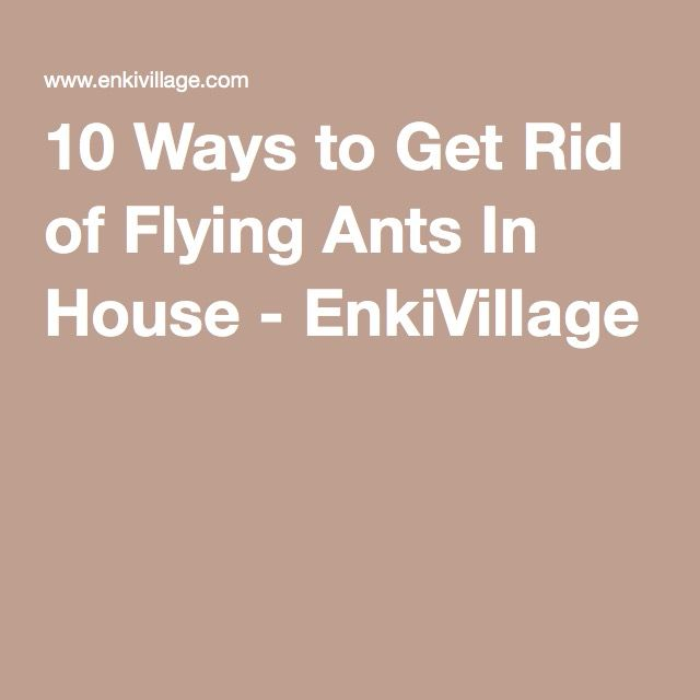 17 best ideas about flying ants on pinterest natural bug Ways to get rid of mosquitoes in your house