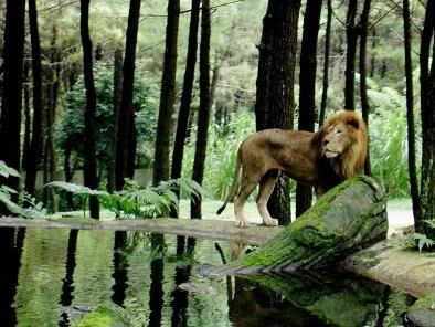 Taman Safari, Bogor,Indonesia
