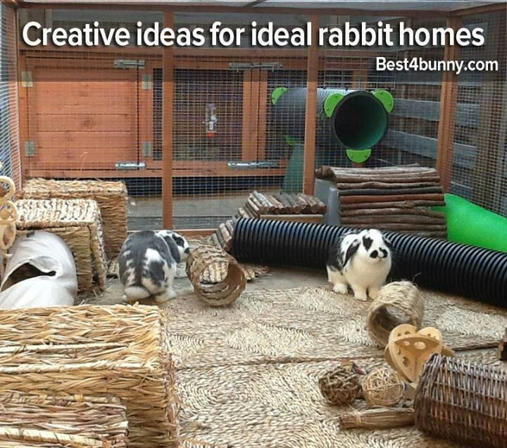 Rabbits - good website with helpful suggestions on how to get to know your bunny!!