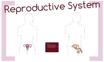 This amazing product will blow you away!Zoom in, zoom out and learn all about the Reproductive System!Try it here:PreviewOr download the Preview file and follow the link.It covers both male and female organs.This leaves ppt presentations miles away! Try it!The teacher decides what can be explored and how exhaustive the explanations can be.Don't miss out on this one!
