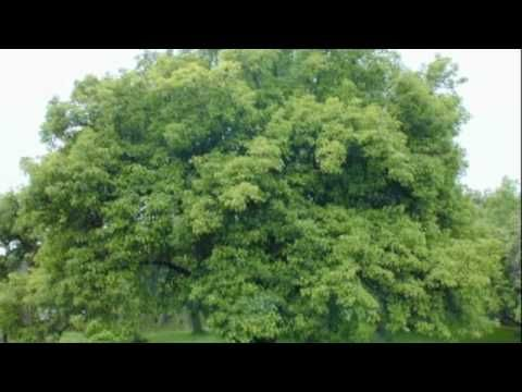 Life cycle of apple tree with song