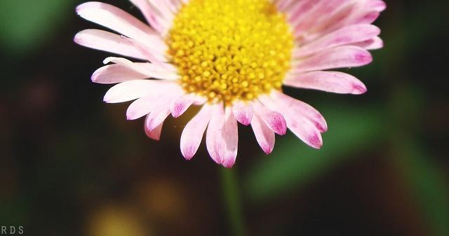 #flowers #photography #macro