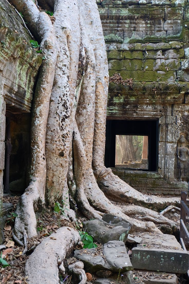 """Beautiful Angkor in Cambodia. One of the highlights was the temple we know from Tomb Raider. """"Ta Prohm"""" - you have to be one of the first visitors in the morning to enjoy. If you are looking for further tips (also for photography places) to visit the Angkor Archeological Parc have a look on my blog."""