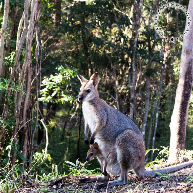 It wont be long before this little joey is bouncing about.