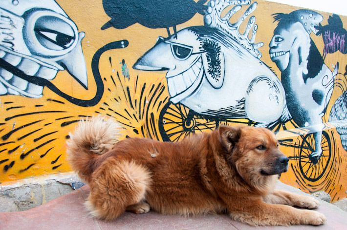 Dogs & Street Art in Valparaiso, #Chile.