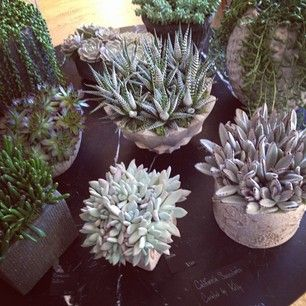 Curated by kelly ...California succulents in super cool handmade pots...At my flagship boutique. Xk