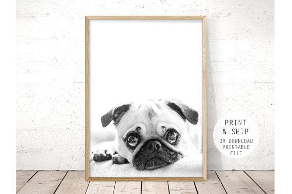 Pug Print Baby Animal Print Puppy Wall Art Nursery Wall Art