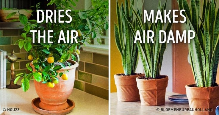 10Plants That Create the Perfect Microclimate atHome