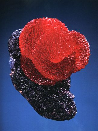 """Iconic specimen of Rhodochrosite on Manganite, named """"The Snail,"""" was acquired by Bill Larson in South Africa."""