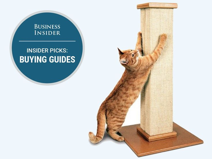 The best cat scratching posts you can buy