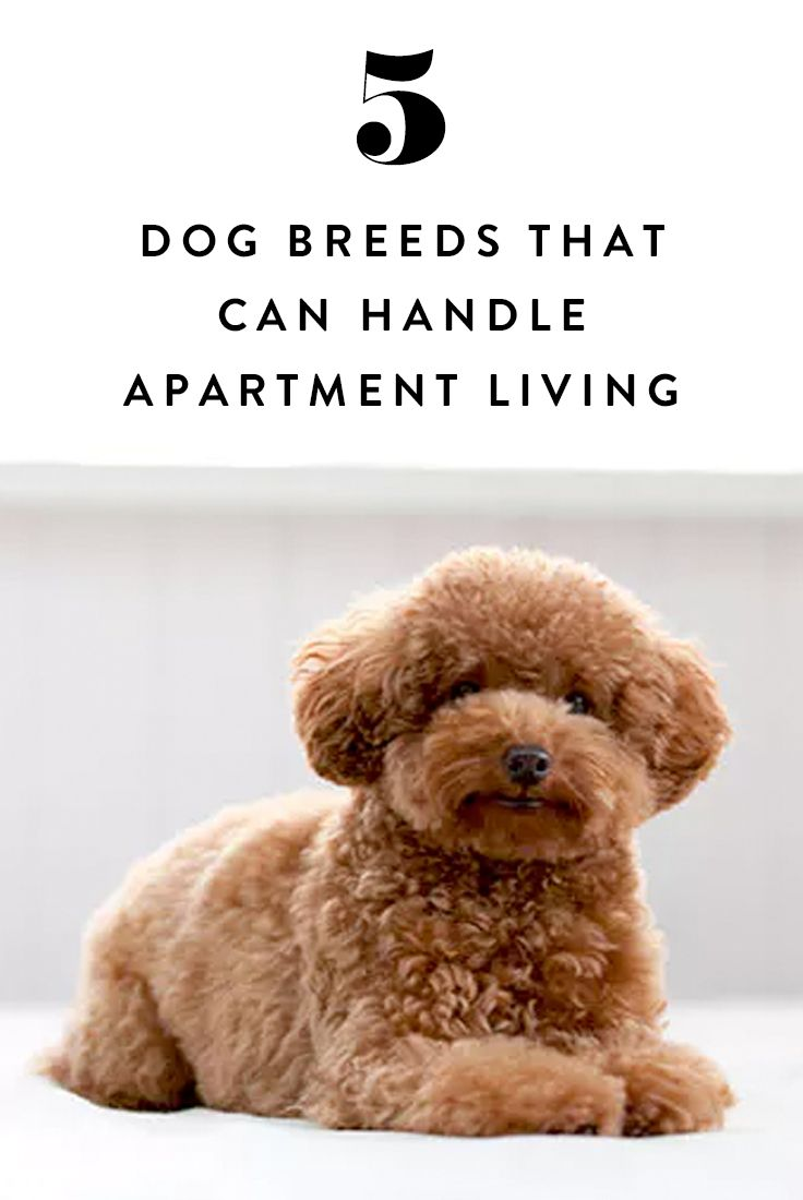 1362 best home decor images on pinterest home live and for Most apartment friendly dogs