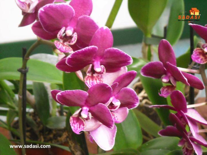 """#hogar LAS MEJORES CASAS DE MÉXICO. Si lo que a usted le gusta son las flores frescas, pero su jardín no las produce, puede probar con un """"ramo viviente"""" de orquídeas mariposa, las cuales son muy fáciles de cultivar e inclusive, se pueden dejar en agua. En Grupo Sadasi, al comprar su casa en nuestros desarrollos, está adquiriendo un patrimonio de vida seguro. www.sadasi.com"""