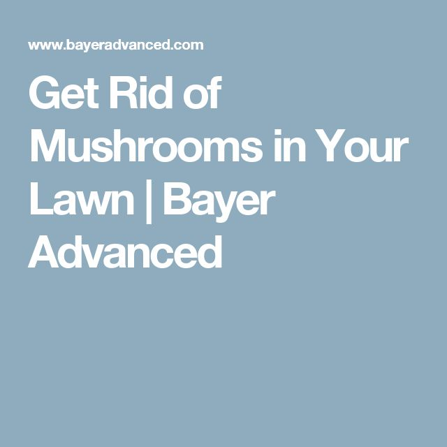 Get Rid of Mushrooms in Your Lawn   Bayer Advanced