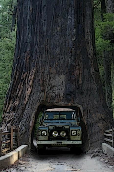 Series 3 in The Giant Forest, Sequoia National Park