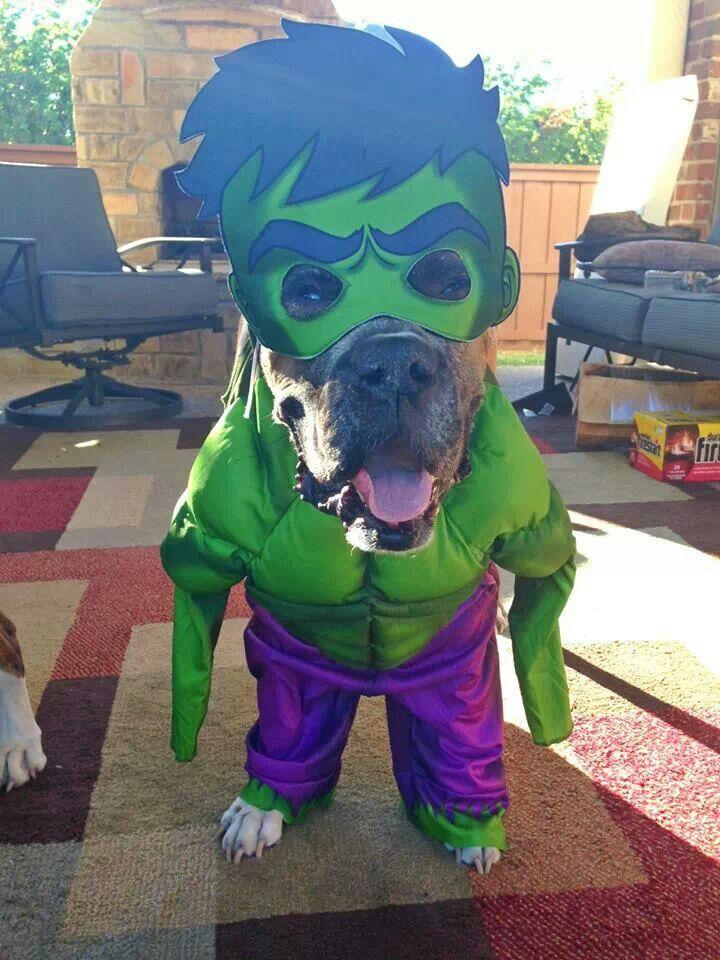 Best dog Halloween costume EVER!!