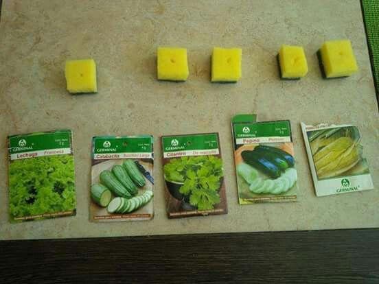 Paso 5  Vamos a colocar en cada esponja una semilla diferente para que puedan observar las variaciones en el crecimiento. Aqui tenemos lechuga, calabacita, cilantro, pepino y lechuga francesa. Todas semillas que ocupan agua abundante para crecer.