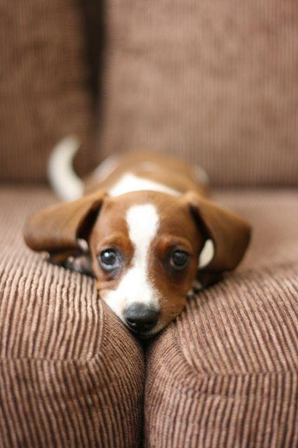o desejo de hoje: enfiada no sofá