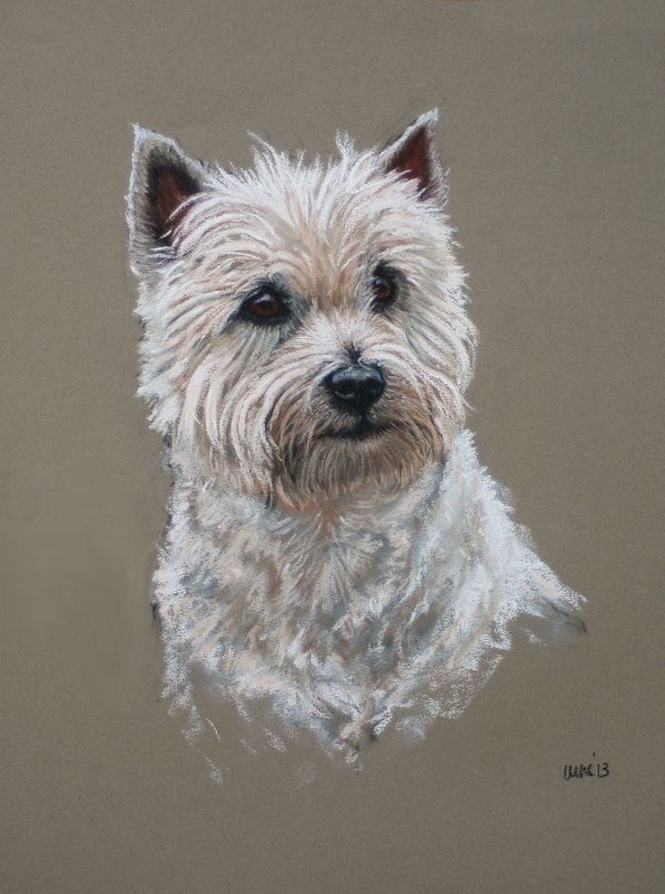West Highland White westie dog fine art Limited by Terrierzs, £10.00