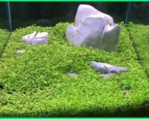 Gambar Tanaman Aquascape - Aquascape