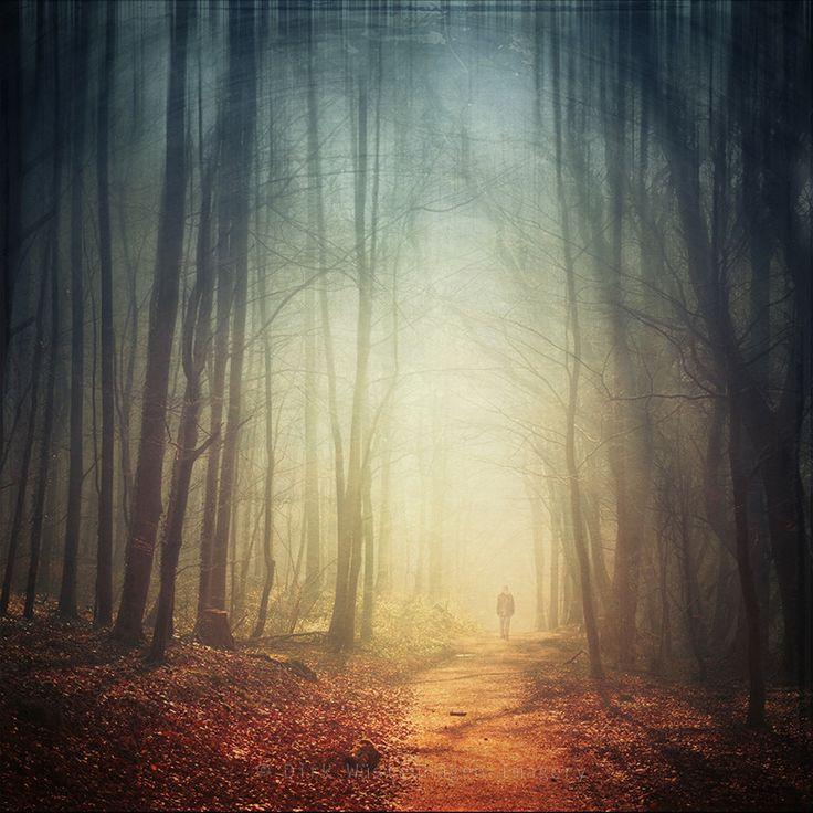 hazy forest by Dirk W�stenhagen on 500px