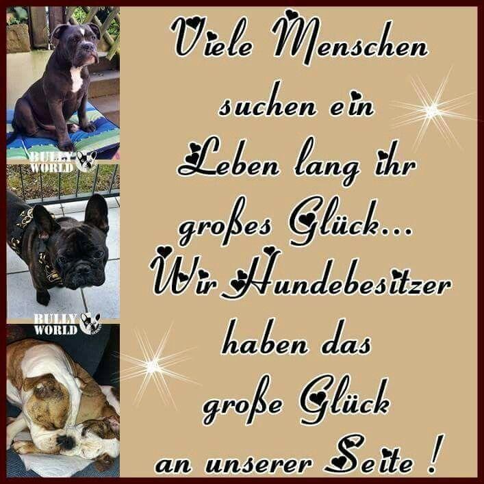 Sprüche Für Die Seele, Der Mensch, Guter Freund, Meine Beste Freundin,  Tierliebe, Treue, Abschied, Hunde, Französische Bulldoggen
