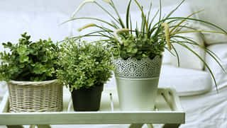 Zdravšie sa vyspíte v miestnosti s rastlinami: Tieto odporúča aj NASA!