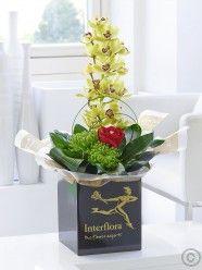 Romantic Orchid Arrangement