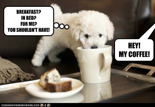 funny puppies pictures - photo #19