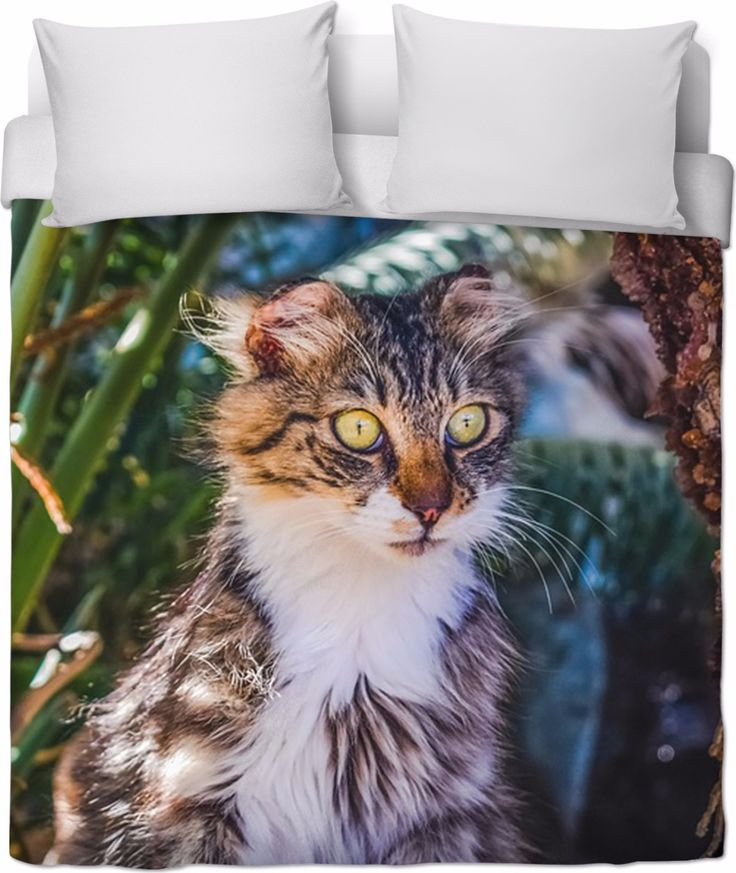 Check out my new product https://www.rageon.com/products/funny-cat-duvet-cover-2?aff=BWeX on RageOn!