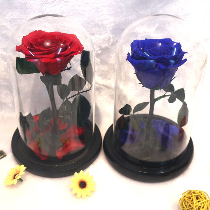 ==> [Free Shipping] Buy Best The Little Prince Glass Cover Preserved Rose Flower Immortal Red Roses for Valentine's Day Christmas Wedding Gifts Wholesale Online with LOWEST Price | 32757971670