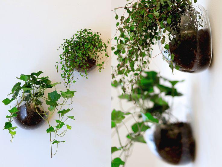 Hängväxter i glaskupor – Inspiration & inredningstips – Inredning online – Lagerhaus