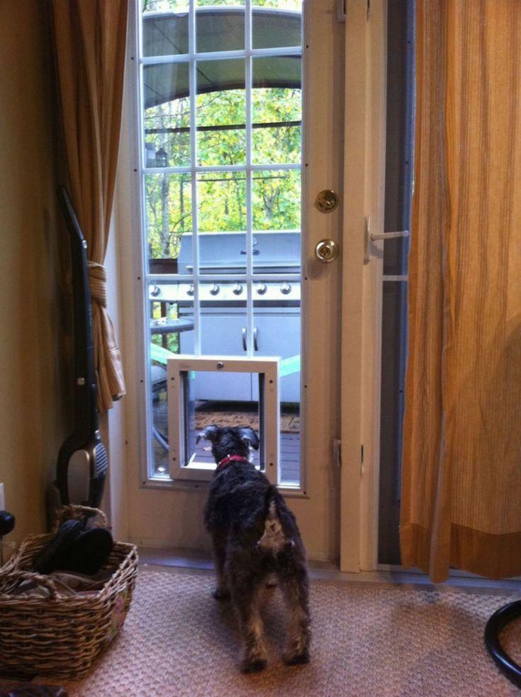 Glass Door With Dog Door