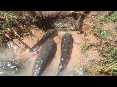 Wow! Amazing People Catching Fish Using Deep Hole Fish Trap-Trap Fishing Videos Catch alot of Fish