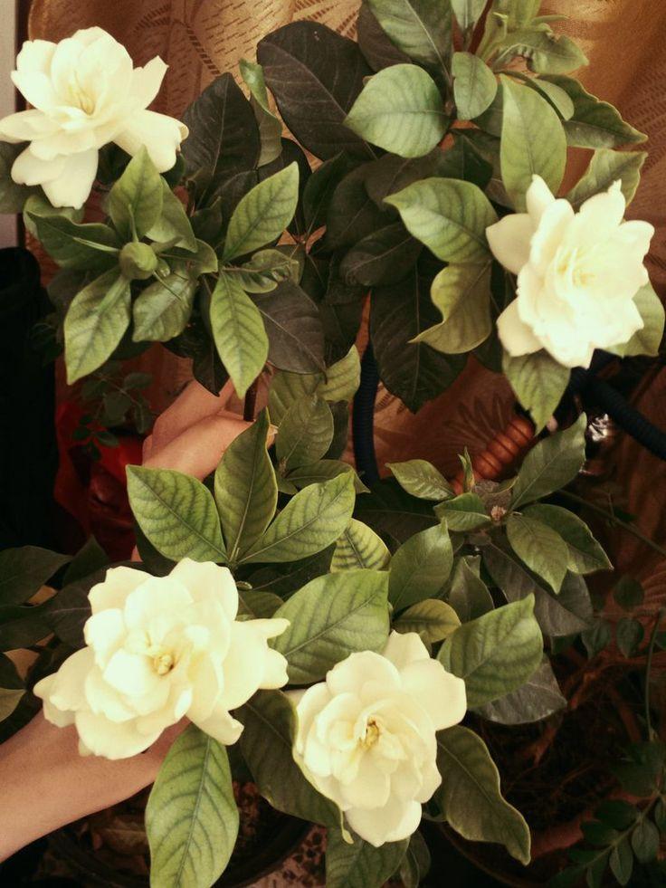 Gardenia In My Room by GhadaCamelia