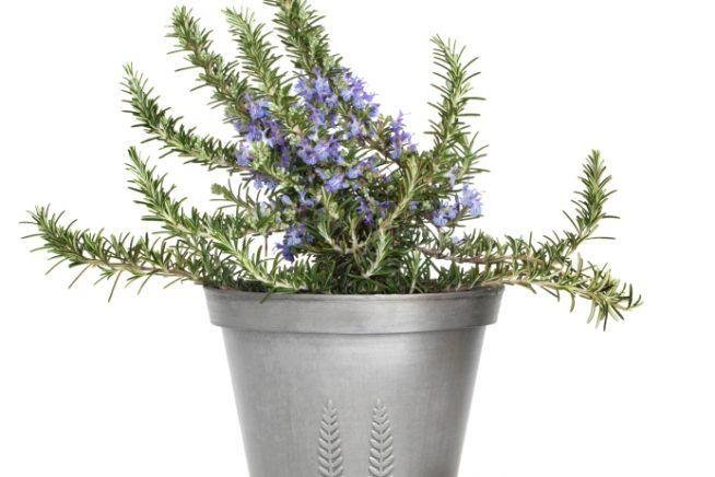 20 best garden galini breeze moodboard images on pinterest breeze herb garden planter and. Black Bedroom Furniture Sets. Home Design Ideas