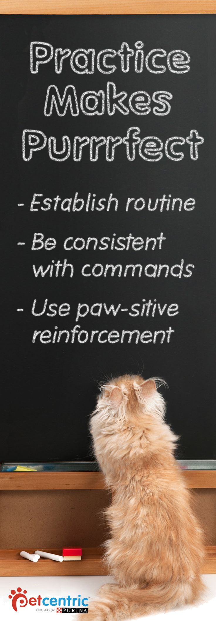 Practice makes purr-fect when training your cat! Pin this now and click through to Petcentric.com for simple tips your entire family can use to work as a team while training your pet.