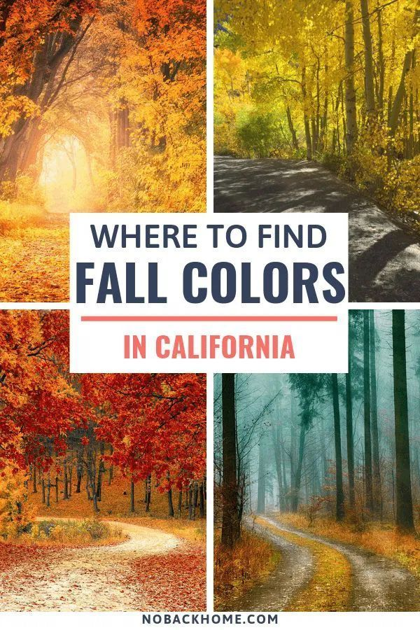 Finding Fall Colors In Bishop California California Travel Road Trips Fall Road Trip Fall Travel Usa