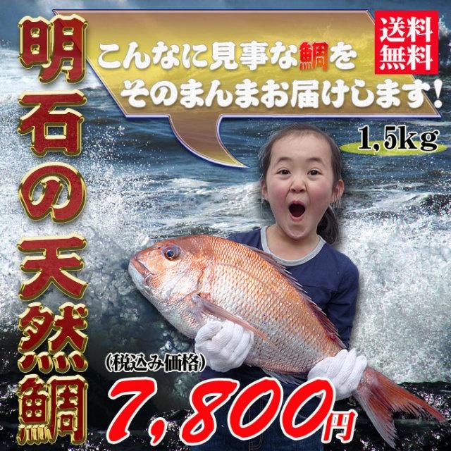 鯛 レシピ 鯛めし 鯛ラバ 鯛焼き 鯛釣り 鯛茶漬けの通販!