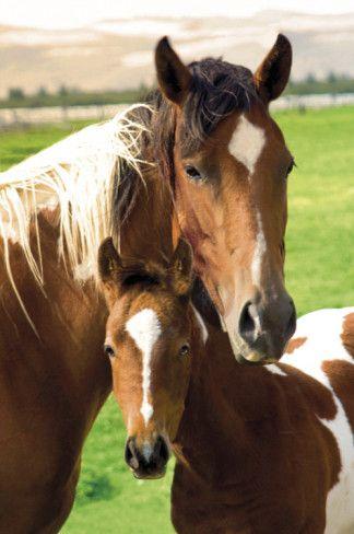 Horses - Mare & Foal    Item #: 8240554