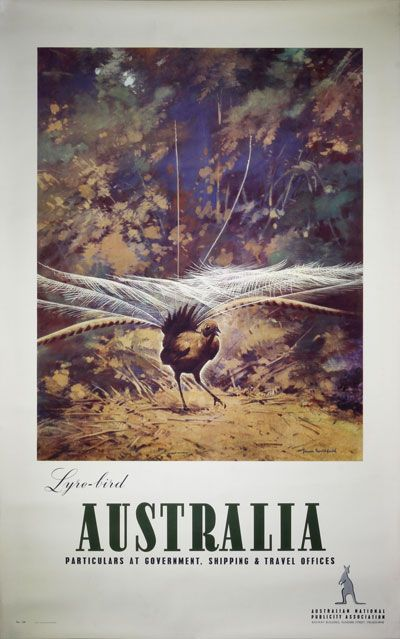 Orignal vintage poster: Australia Lyrebird by Northfield, James (1888-1973)